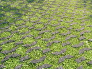 Dalle drainante betogreen alkern